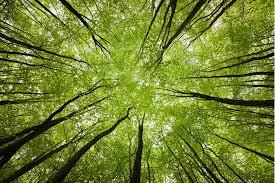 copaci-frunze